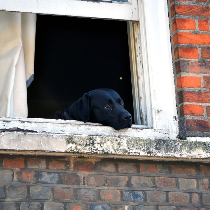 This dog has blogging to do, but would rather be outside. A tale of woe.